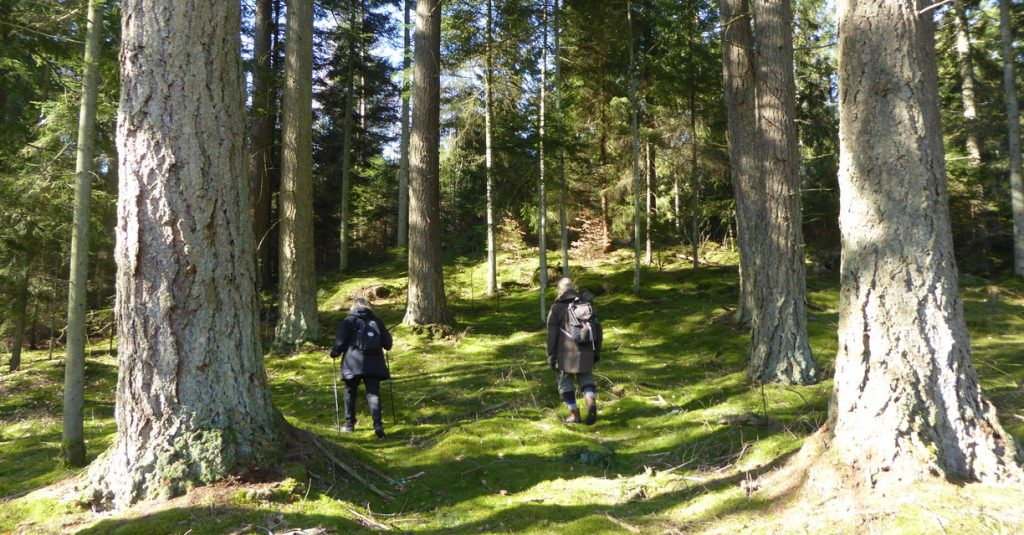Skog vandring